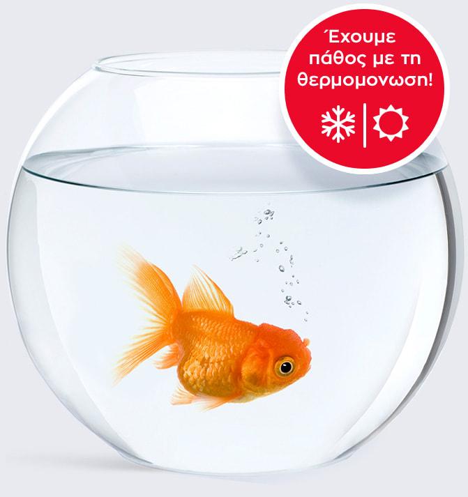 Ψάρι σε γυάλα, Θερμομόνωση